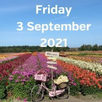 Visit dahlia fields 3 September 2021