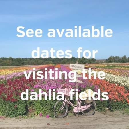 visit dahlia fields